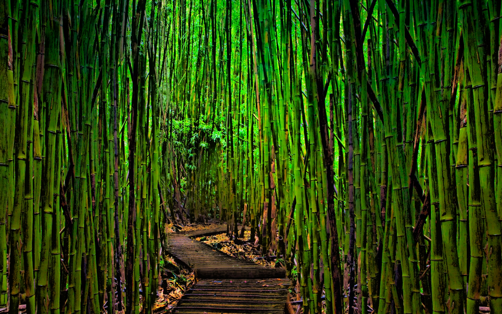 bamboo plywood forest